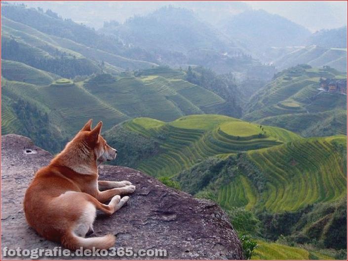 10 Tiere mit den schönsten Aussichten (1)
