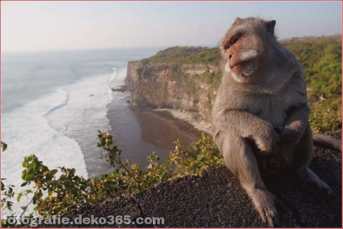 10 Tiere mit den schönsten Aussichten (2)