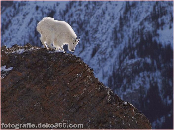 10 Tiere mit den schönsten Aussichten (3)