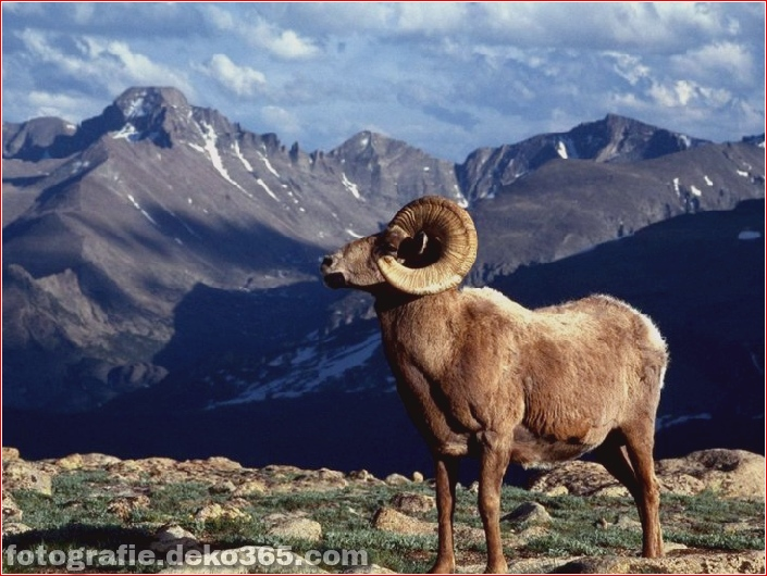 10 Tiere mit den schönsten Aussichten (4)