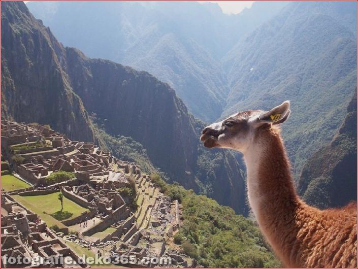 10 Tiere mit den schönsten Aussichten (7)