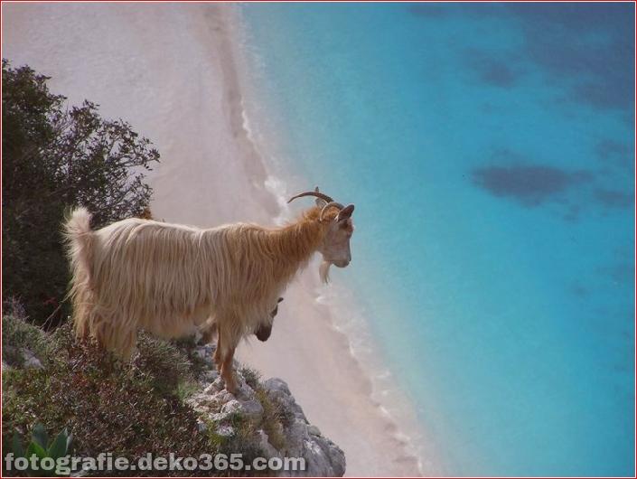 10 Tiere mit den schönsten Aussichten (8)