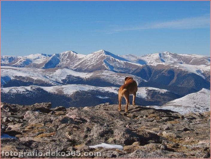 10 Tiere mit den schönsten Aussichten (10)