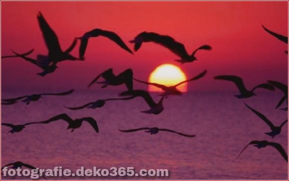 Naturfotografie (9)