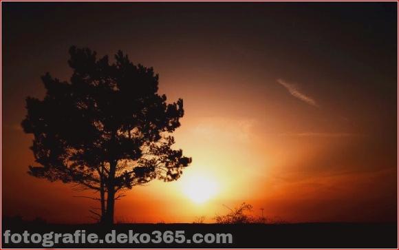 Naturfotografie (26)