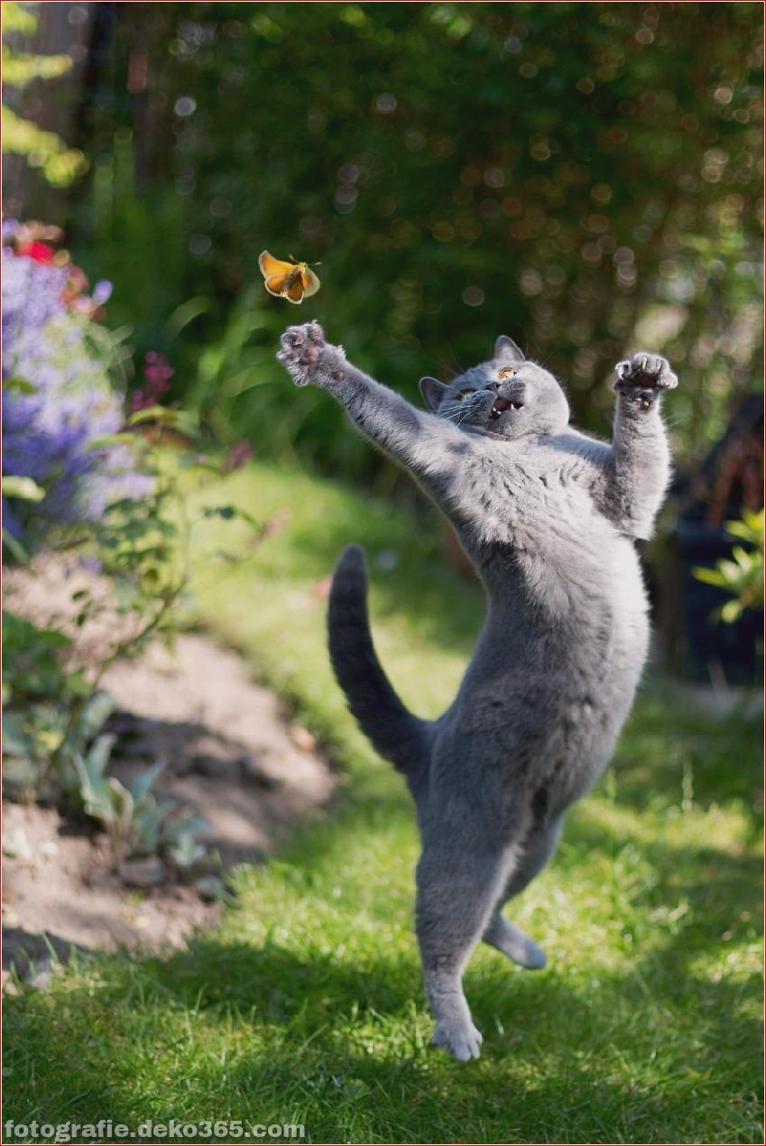 Lustige Katzenbilder (1)