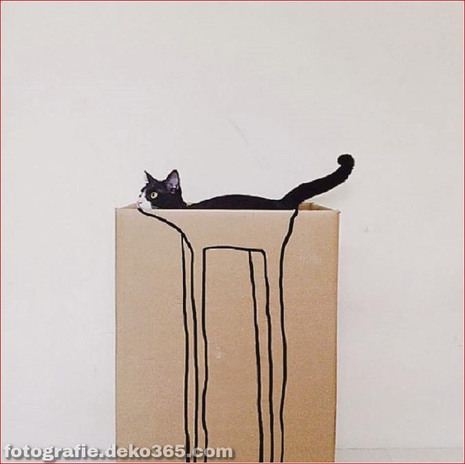 Lustige Katzenbilder (2)