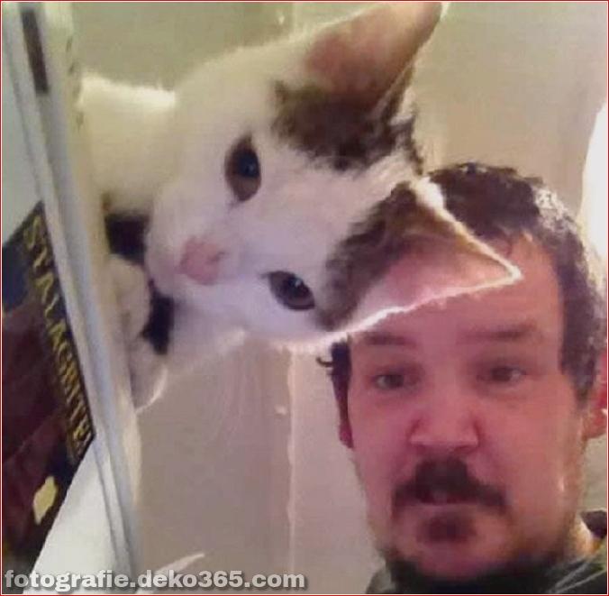 Lustige Katzenbilder (4)