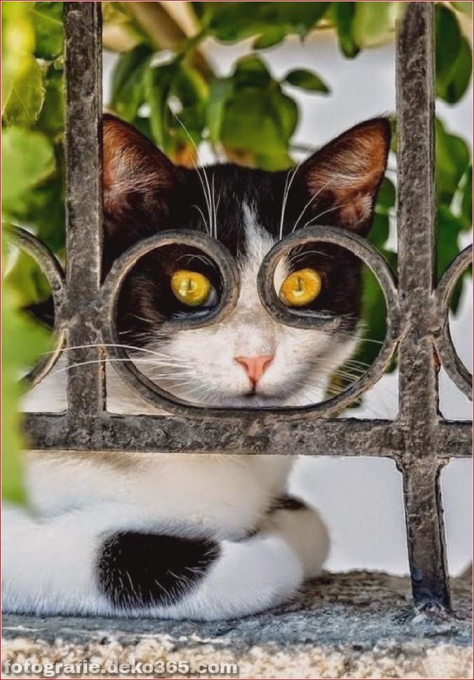 Lustige Katzenbilder (5)