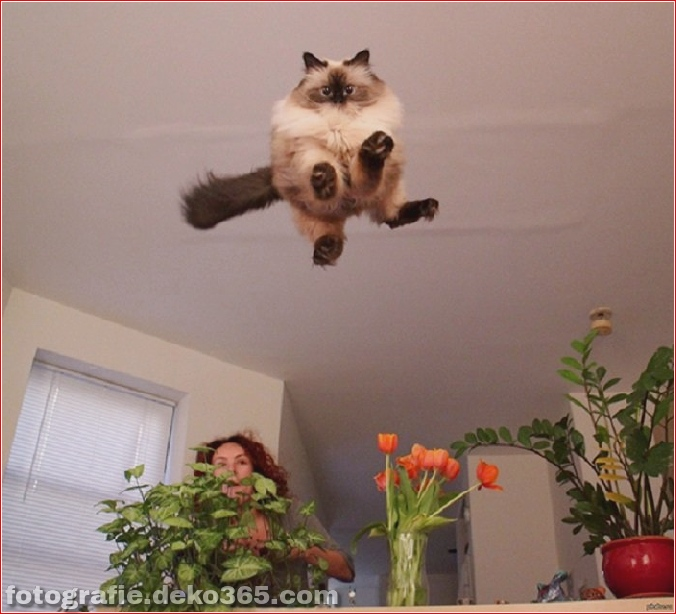 Lustige Katzenbilder (6)