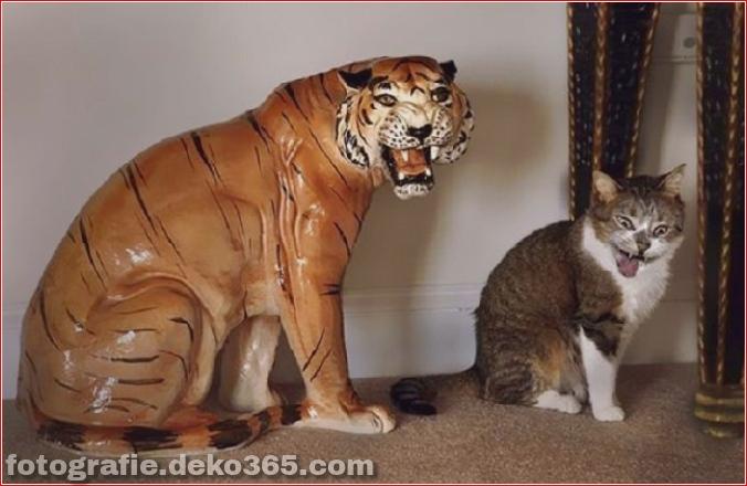 Lustige Katzenbilder (7)