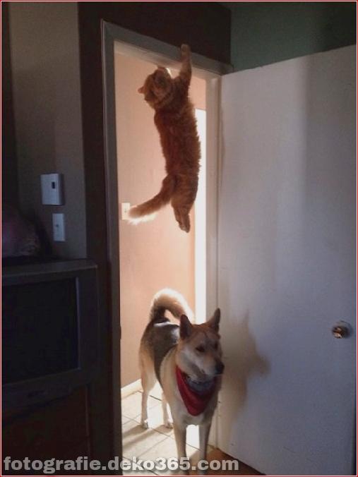 Lustige Katzenbilder (8)