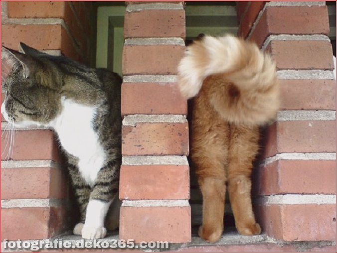 Lustige Katzenbilder (11)