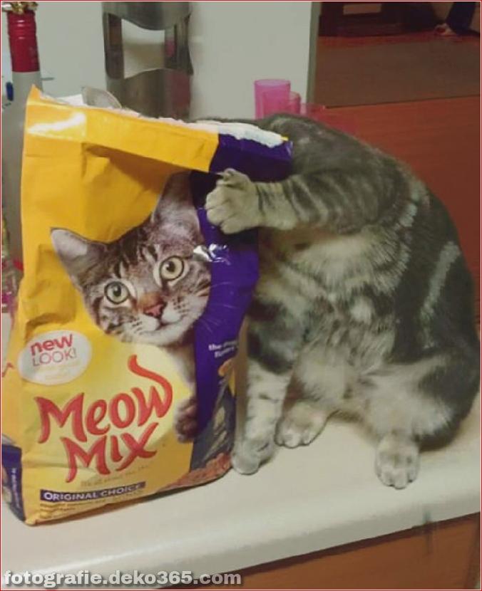 Lustige Katzenbilder (13)