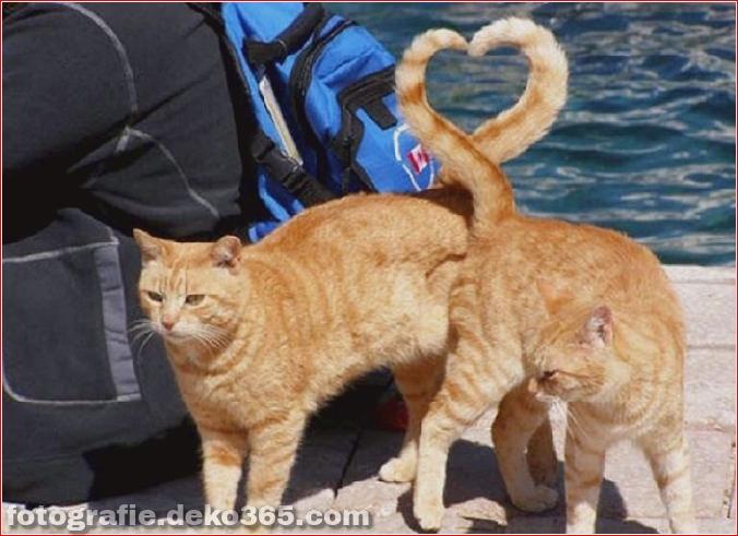 Lustige Katzenbilder (15)