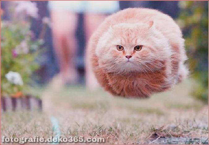 Lustige Katzenbilder (16)