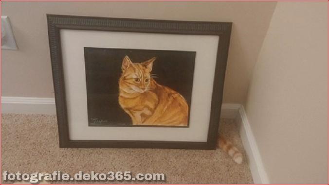 Lustige Katzenbilder (17)