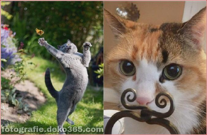 Lustige Katzenbilder (18)