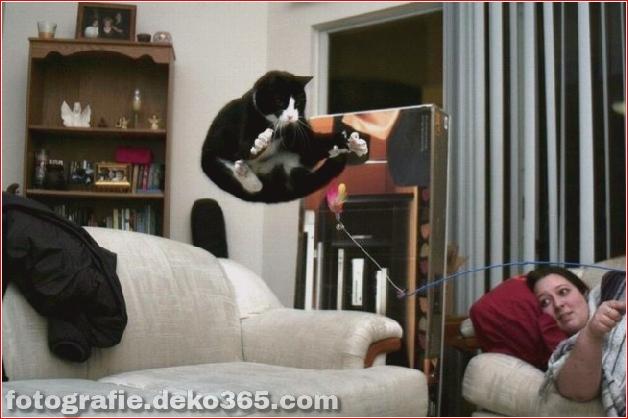 Lustige Katzenbilder (19)