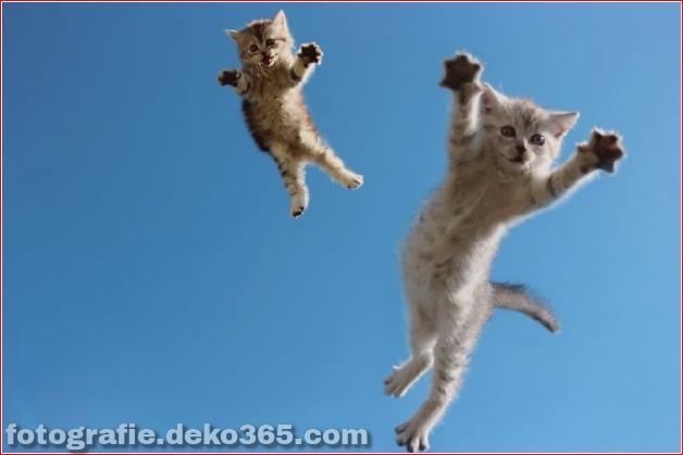 Lustige Katzenbilder (20)