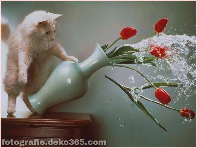 Lustige Katzenbilder (21)