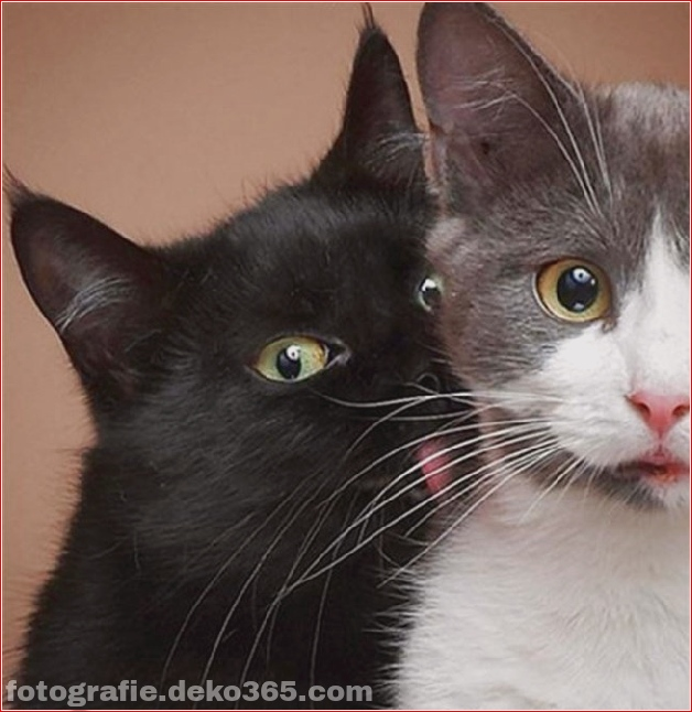 Lustige Katzenbilder (22)