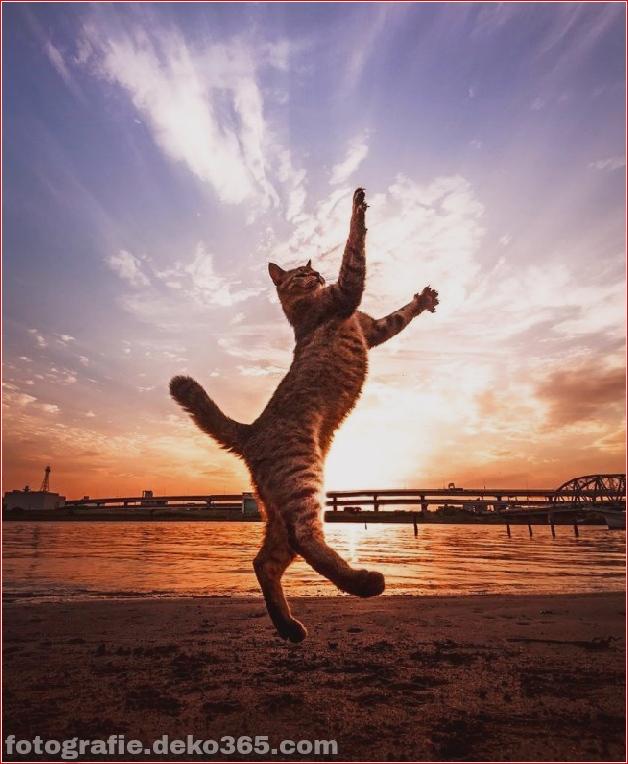 Lustige Katzenbilder (23)