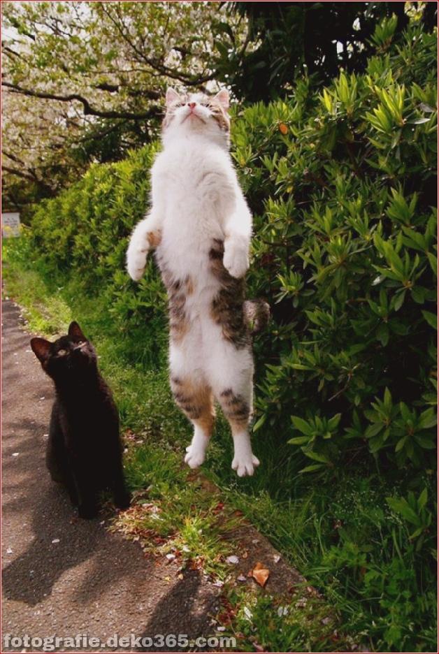 Lustige Katzenbilder (24)