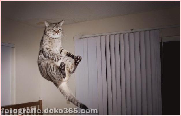 Lustige Katzenbilder (26)