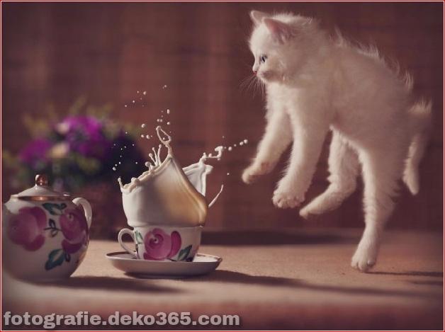 Lustige Katzenbilder (27)