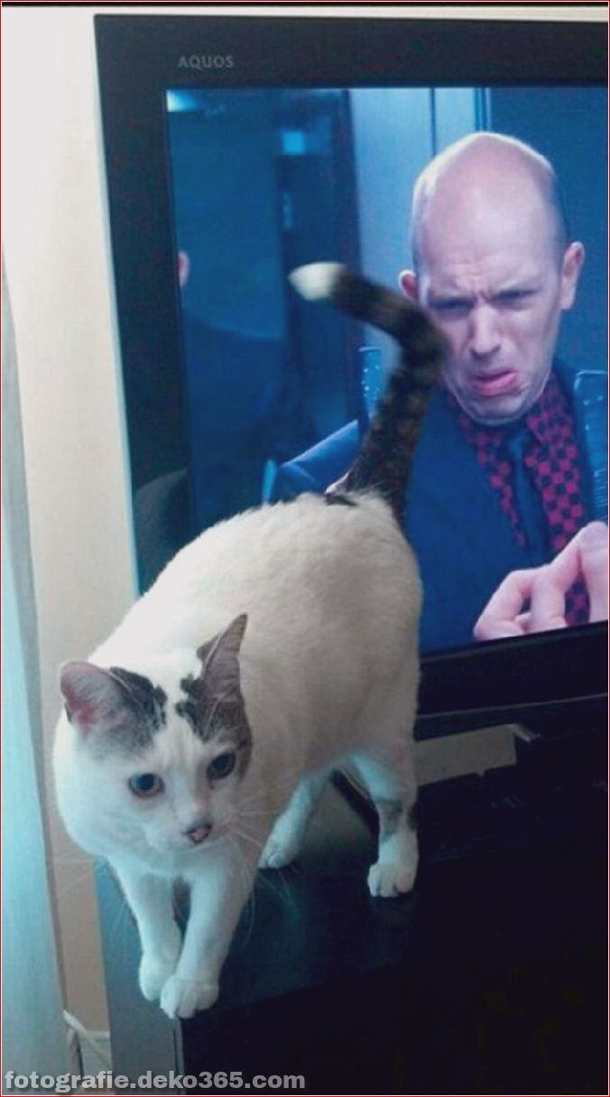 Lustige Katzenbilder (28)