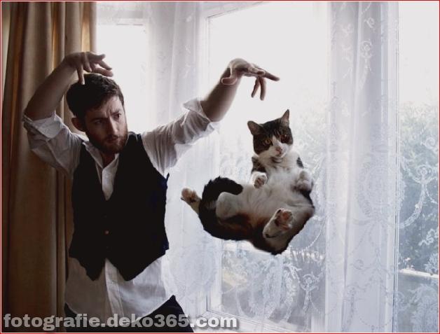 Lustige Katzenbilder (29)