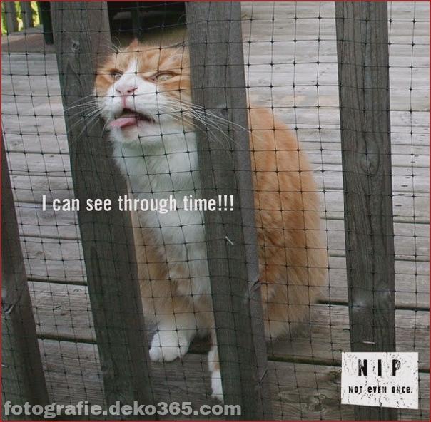 Lustige Katzenbilder (32)