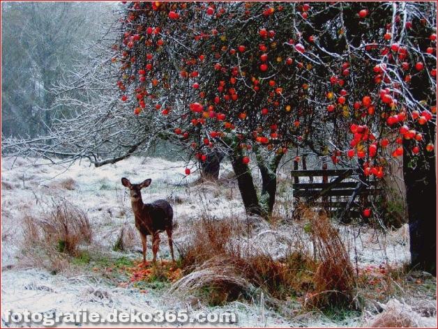 Winter Photographs (5)