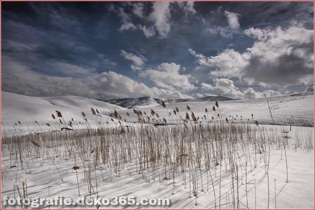 Winter Photographs (8)