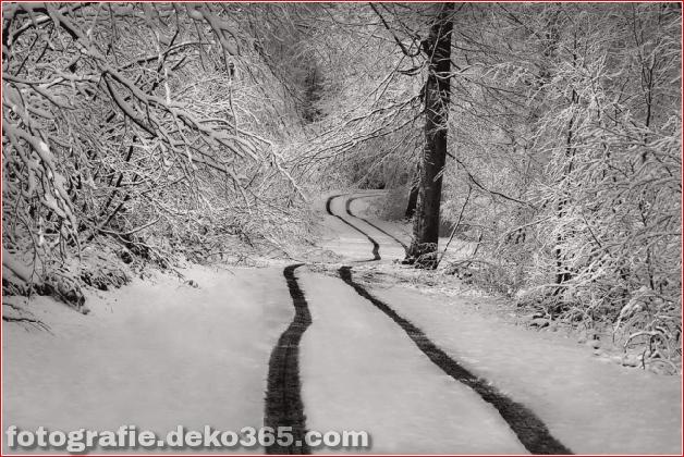 Winter Photographs (13)