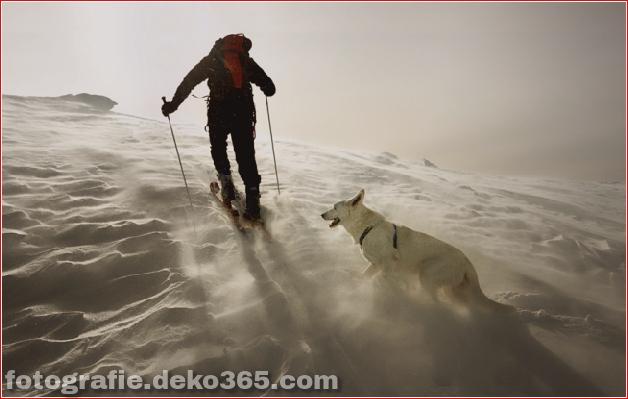 Winter Photographs (27)