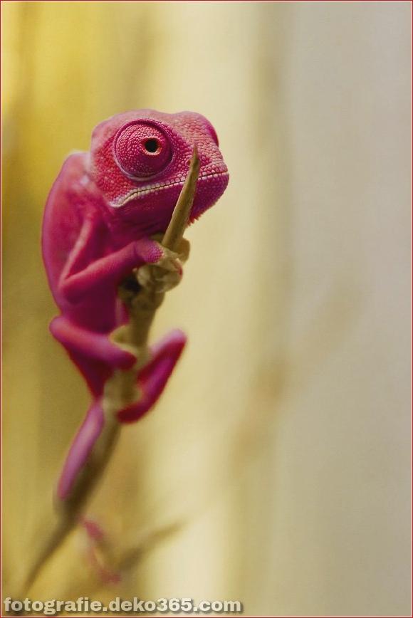 Bunte Tierfotografie (4)