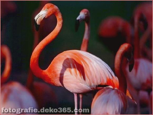 Bunte Tierfotografie (35)