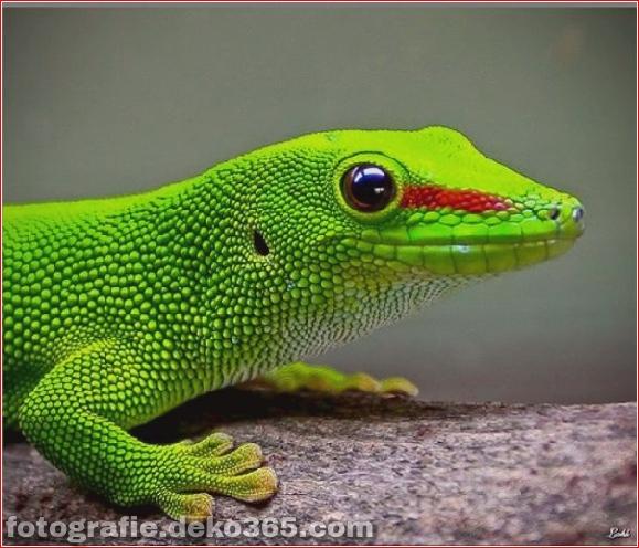 Bunte Tierfotografie (36)