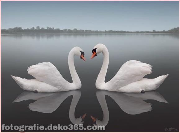 50 Verschiedene Liebesfotografien_5c901954590d8.jpg