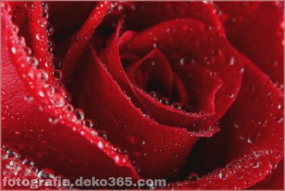 50 Verschiedene Liebesfotografien_5c9019557a047.jpg