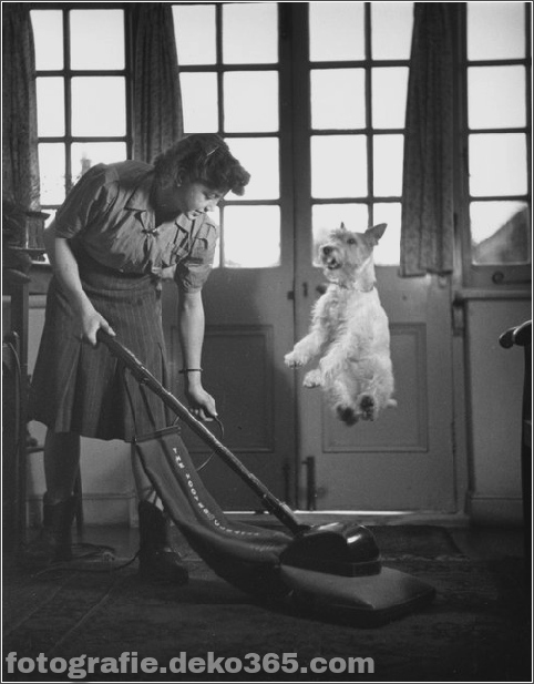 Alte Hundefotografie