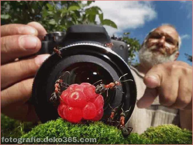Ameisenleben Mikrofotografie_5c90620aa68b5.jpg