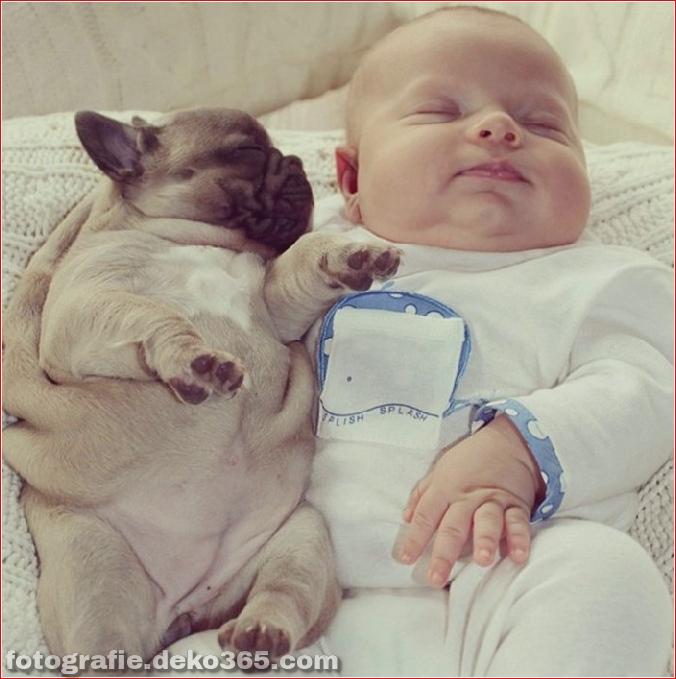 Baby mit Welpen der französischen Bulldogge (2)