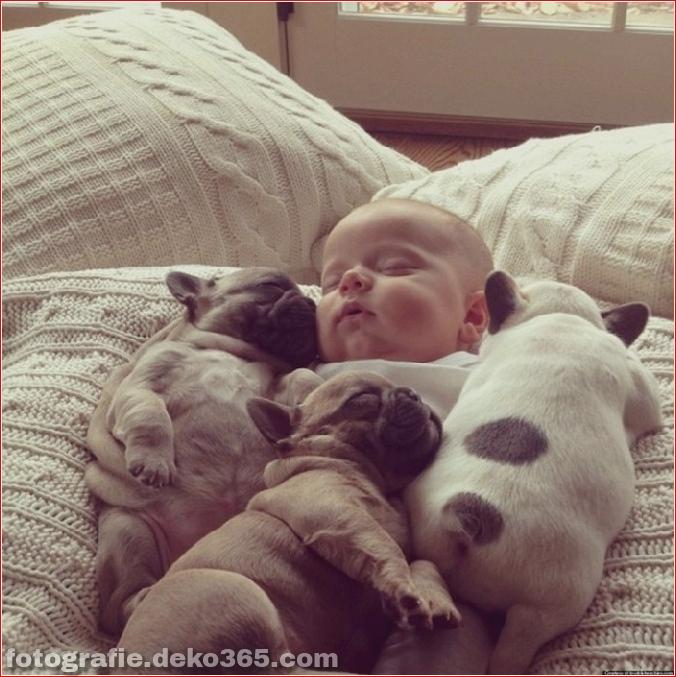 Baby mit Welpen der französischen Bulldogge (3)