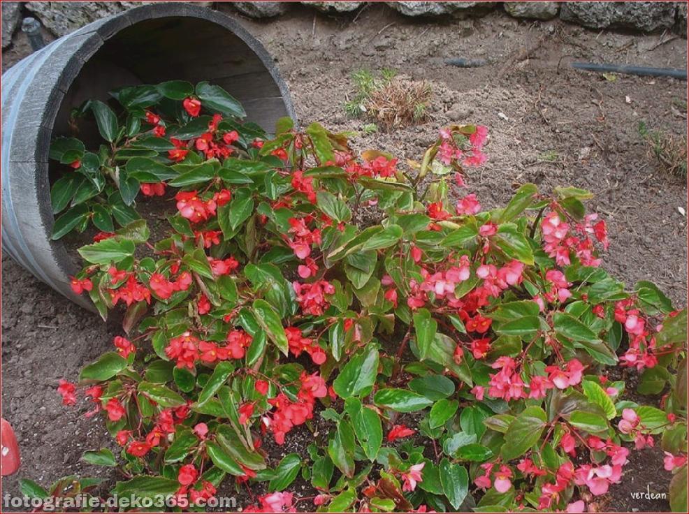 Kreative Blumentöpfe (4)