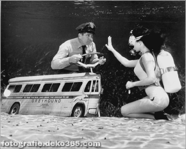 Das Leben im Wasser mit Bruce Mozert (10)