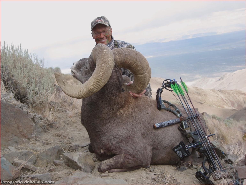 Walter Palmer posiert Jagd Tiere (2)
