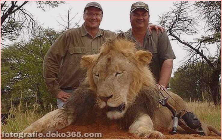 Walter Palmer posiert Jagd Tiere (6)
